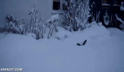 Enlace a Un gato que entiende que la mejor manera de desplazarse por la nieve es a lo conejo