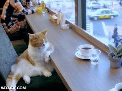 Enlace a Aquí pensando en cosas de gatos y sobre la vida en general