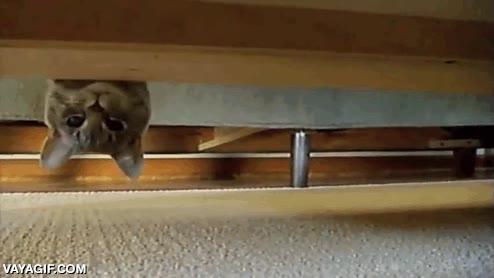 Enlace a ¡Hola! ¿Hay algún gato por aquí?