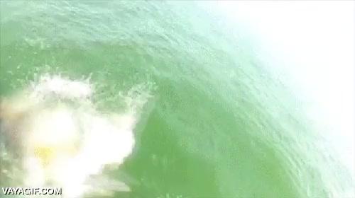 Enlace a No sé qué clase de monstruo marino puede comerse un tiburón de ese tamaño, pero da miedo