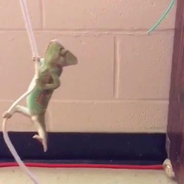 Enlace a El camaleón que soñaba con ser Tarzán