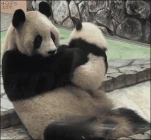 Enlace a No se puede ser más tierno que este pequeño panda con su madre
