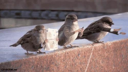 Enlace a En serio, los pájaros deberían tener brazos