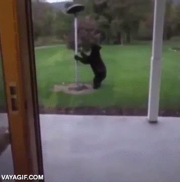 Enlace a Por si ver un oso en tu propio jardín no diera bastante miedo...