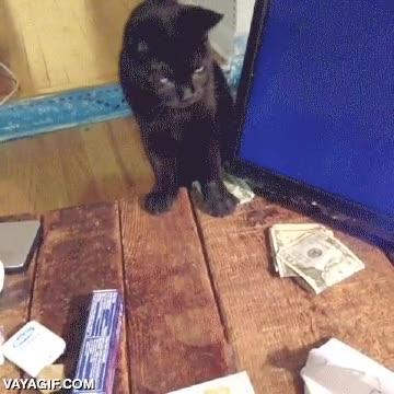 Enlace a ¿Dinero? ¿Qué dinero?