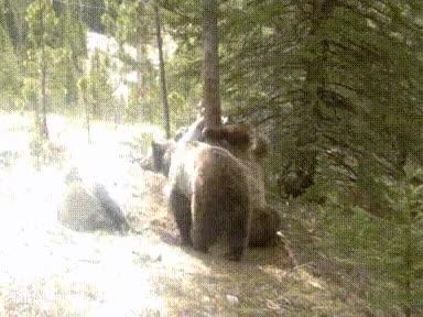 Enlace a Y de repente, ¡osos!