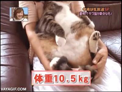 Enlace a Creo que el gato ha engordado un poquito