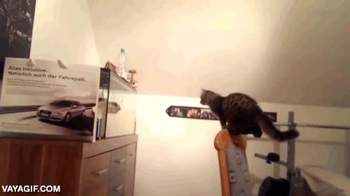 Enlace a ¿Puede alguien explicarle a este gato cómo funcionan los cristales?