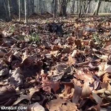 Enlace a ¡Esperadme, esperadme! ¡Que hay muchas hojas secas y yo soy muy pequeño!