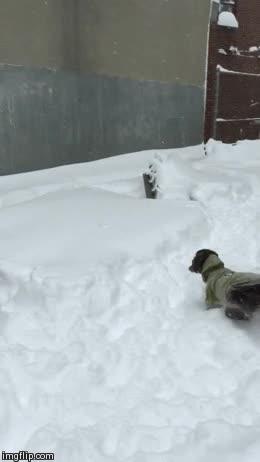 Enlace a Si tu perro no es muy grande, no lo saques a jugar con medio metro de nieve en la calle