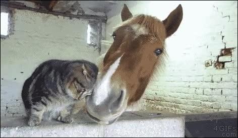 Enlace a Somos los mejores amigos del reino animal