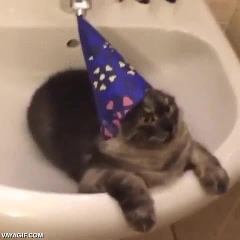 Enlace a Al gato brujo no parece gustarle su nuevo gorrito