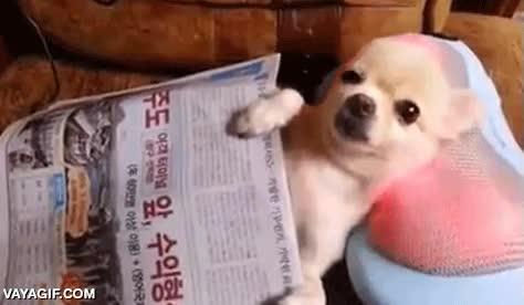 Enlace a Relájate tanto como quieras, nunca conseguirás estar más regalado que este perro