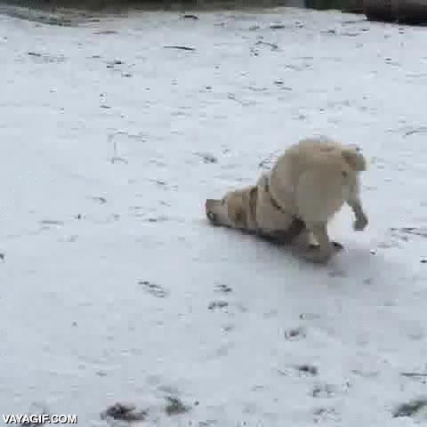 Enlace a Este perro tiene una relación extraña con la nieve, siempre que la ve hace esto