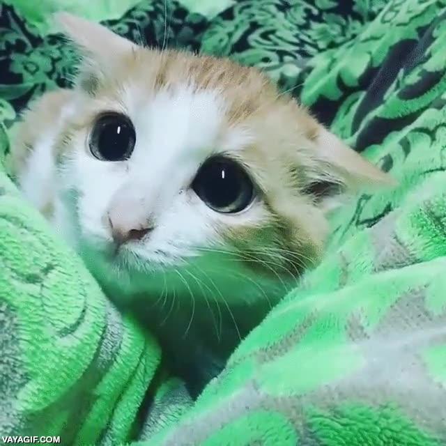Enlace a Un gato llevando la adorabilidad a su máximo exponente