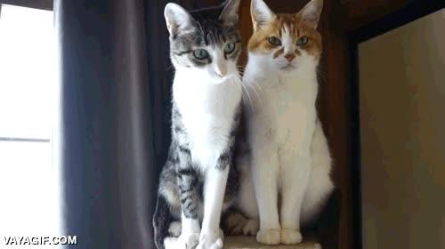 Enlace a Hay dos tipos de gatos, los juguetones y los que te odian con toda su alma