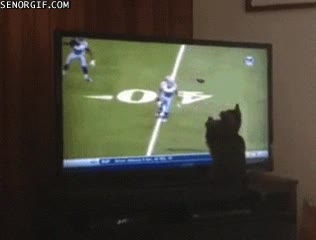 Enlace a Si los Seahawks hubieran tenido a este gato, seguro que no hubieran perdido la Super Bowl