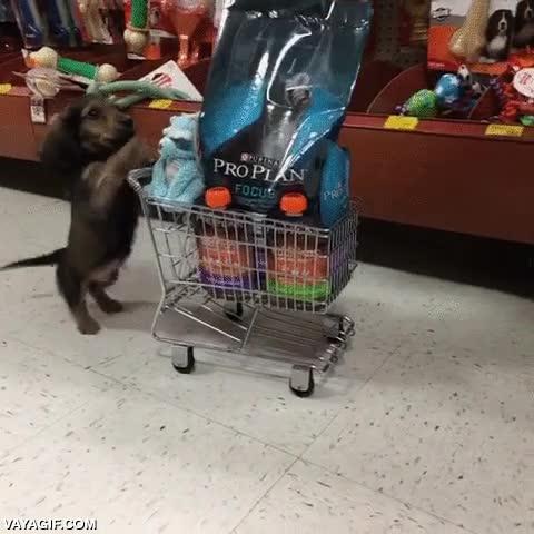 Enlace a ¡Es que nadie me ayuda con la compra en esta casa, todo tengo que hacerlo yo!