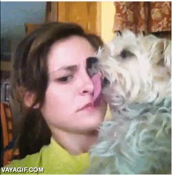 Enlace a Mi perro me estaba lamiendo la cara y de repente se ha quedado así