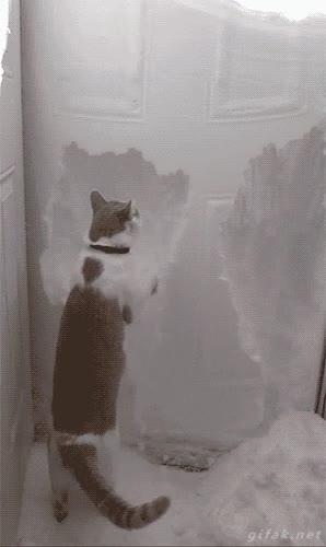 Enlace a ¡Tengo que salir de aquí, tengo que salir de aquí!