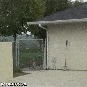 Enlace a Todos somos muy valientes con los perros cuando están detrás de una valla