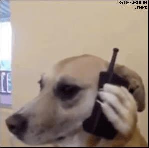 Enlace a Sí, ¿es la clínica veterinaria? Ahá, mire, llamaba para cancelar una castración...