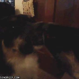 Enlace a El perro con menos problemas de autoestima del mundo