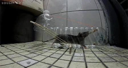 Enlace a Una forma efectiva de atrapar ratones