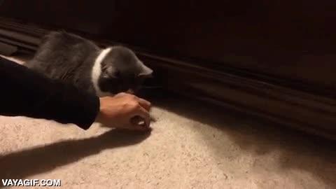 Enlace a En el mundo de los gatos también están los espabilados y los ''empanaos''