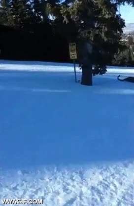 Enlace a Esquiando tranquilamente cuando de repente...