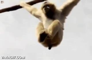 Enlace a Y por eso no es buena idea dejar a los monos sueltos en el zoo