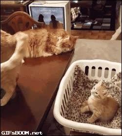 Enlace a El gatito que se auto-hipnotizó
