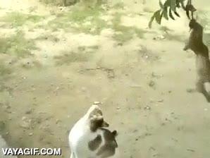 Enlace a No solo a nosotros nos gusta jugar con los gatos