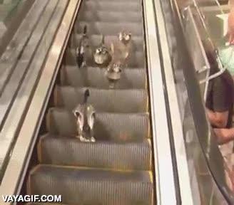 Enlace a ¿Pero es que estas escaleras no se acaban nunca o qué? ¡Qué patosos!