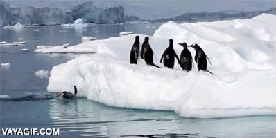 Enlace a La adorable torpeza de los pingüinos