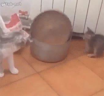 Enlace a Ya sabemos lo que pasa con la curiosidad de los gatos