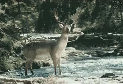 Enlace a Vas a refrescarte en el río cuando de repente...