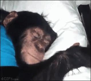 Enlace a Ahora dime que no venimos de los monos