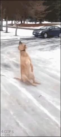 Enlace a El perro que aprendió una valiosa lección, la nieve es muy resbaladiza