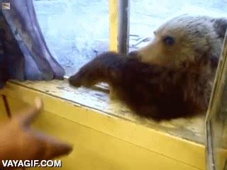 Enlace a El oso mendigo, cosas que solo pasan en Rusia