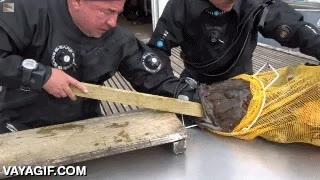 Enlace a No sé por qué ha metido la mano en la boca del pez, pero seguro que no volverá a hacerlo