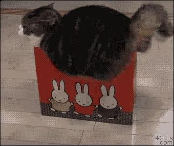 Enlace a No lo entiendo, cuando tenía 3 meses cabía aquí perfectamente, se habrá encogido la caja...