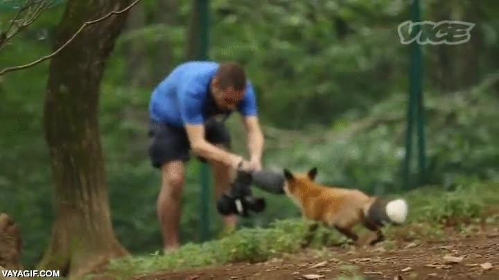 Enlace a El riesgo de grabar documentales con animales tan de cerca