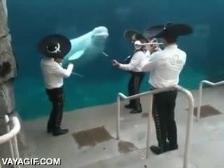Enlace a No me extraña que la beluga esté flipando