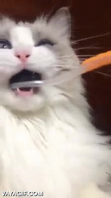 Enlace a El gato que se quedó más clavado que un Windows