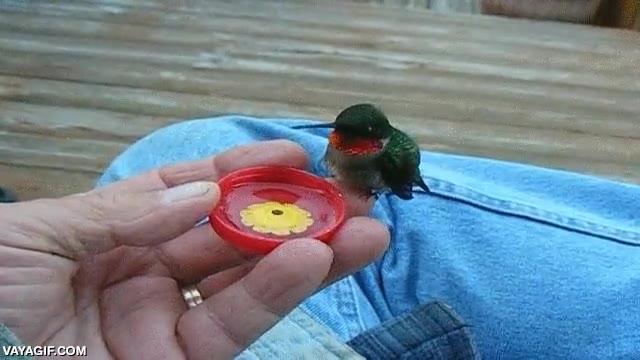 Enlace a ¿Habías visto a un colibrí bebiendo agua?