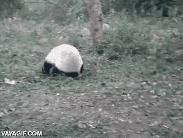 Enlace a ¿Kung-fu Panda? ¡Nah, mejor Ninja Panda!