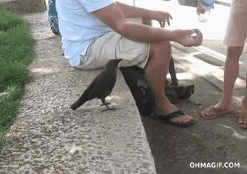 Enlace a Un pájaro sediento se espabila para pedir agua a estos humanos