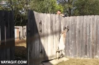 Enlace a Tranquilos, Bambi está a salvo ahora