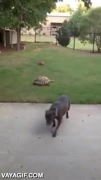 Enlace a No es muy justo jugar al pilla-pilla con una tortuga